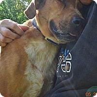 Adopt A Pet :: Jack - Bakersville, NC