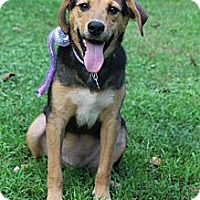 Adopt A Pet :: Jackson - Harrisburgh, PA