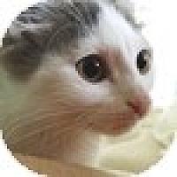 Adopt A Pet :: Iniesta - Vancouver, BC