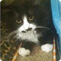 Adopt A Pet :: Tootsie Roll - Greenville, SC