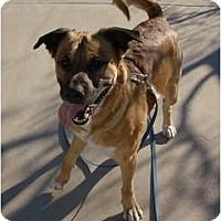 Adopt A Pet :: Kody - Only $65 adoption fee! - Litchfield Park, AZ