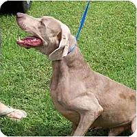 Adopt A Pet :: Parker - Eustis, FL