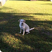 Adopt A Pet :: Charlie - Williston, FL