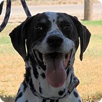 Adopt A Pet :: Barney - Turlock, CA