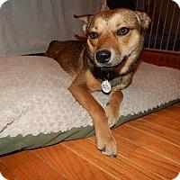 Adopt A Pet :: Mutsu - Manassas, VA