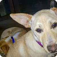 Adopt A Pet :: Paisley - in Maine - kennebunkport, ME