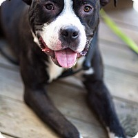 Adopt A Pet :: Tarquinn - Reisterstown, MD