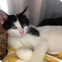 Adopt A Pet :: Jamie - East Brunswick, NJ