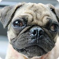 Adopt A Pet :: Gizmo - Buena Park, CA
