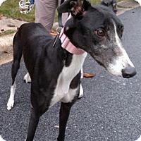 Adopt A Pet :: Dart - Spencerville, MD
