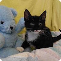 Adopt A Pet :: Robby - Arlington, VA