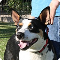 Adopt A Pet :: Bindi - Madera, CA