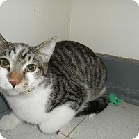 Adopt A Pet :: Garrison - Milwaukee, WI