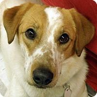Adopt A Pet :: Bosco - Garfield Heights, OH