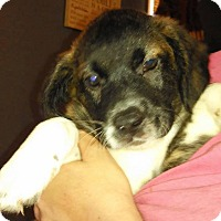 Adopt A Pet :: Logan - Charlestown, RI