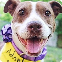 Adopt A Pet :: Loretta Lynn - Nashville, TN