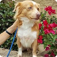 Adopt A Pet :: Cuervo - Costa Mesa, CA