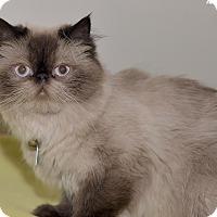 Adopt A Pet :: Fanny - Medina, OH
