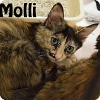 Adopt A Pet :: Molli - Las Vegas, NV