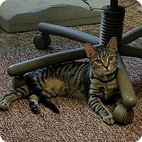 Adopt A Pet :: Roxie - Tampa, FL