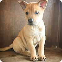 Adopt A Pet :: Connor - Fredericksburg, TX