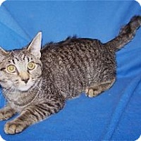Adopt A Pet :: K-Sasha5-Shawna - Colorado Springs, CO