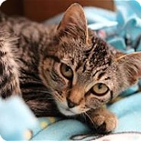 Adopt A Pet :: Mesa - Lincoln, CA