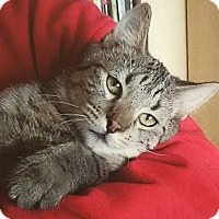 Adopt A Pet :: Feisty - Naperville, IL