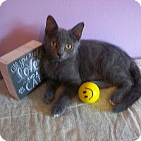 Adopt A Pet :: Toey - Tampa, FL