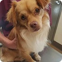 Adopt A Pet :: Nemo #163269 - Apple Valley, CA