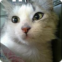 Adopt A Pet :: Ziggy - Bainsville, ON