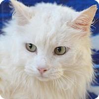 Adopt A Pet :: Dobby - Englewood, FL