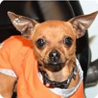 Adopt A Pet :: TIMMY - Red Bluff, CA