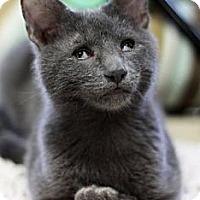 Adopt A Pet :: Otis - Alexandria, VA