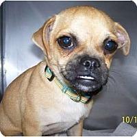 Adopt A Pet :: Tinker - Allentown, PA