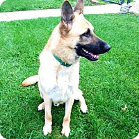 Adopt A Pet :: Tanner - Evergreen Park, IL