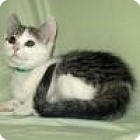 Adopt A Pet :: Georgia - Powell, OH