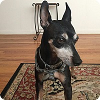 Adopt A Pet :: Henry (Courtesy Posting) - Malaga, NJ
