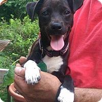 Adopt A Pet :: Nemo - Charlestown, RI