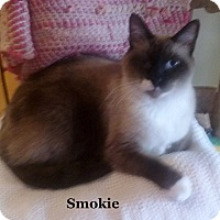 Adopt A Pet :: Smokie - Bentonville, AR