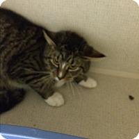 Adopt A Pet :: LESTER - Hamilton, NJ