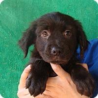 Adopt A Pet :: Avery - Oviedo, FL