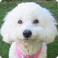 Adopt A Pet :: Chelsea - La Costa, CA