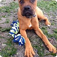 Adopt A Pet :: Maggie 2 - Woodinville, WA