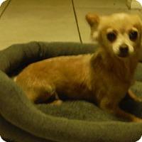 Adopt A Pet :: Pixie - Alpharetta, GA