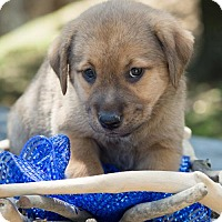 Adopt A Pet :: Eliza Schuyler - Glastonbury, CT