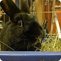 Adopt A Pet :: Blackberry - Livermore, CA