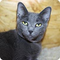 Adopt A Pet :: Cheira - Tucson, AZ