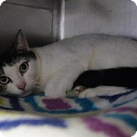 Adopt A Pet :: Spotakus - New Milford, CT