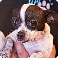 Adopt A Pet :: Jill - Concord, CA